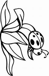 Coloring Bugs Printables Bug Pages Beetles Enjoyed Try Then Painting These Central sketch template