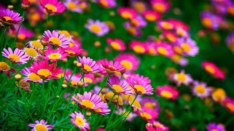 Beautiful Flowers Wallpaper (60+ Images