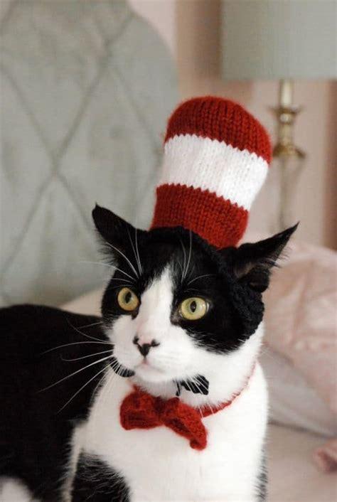 cat   hat halloween costumejpg vetbabble