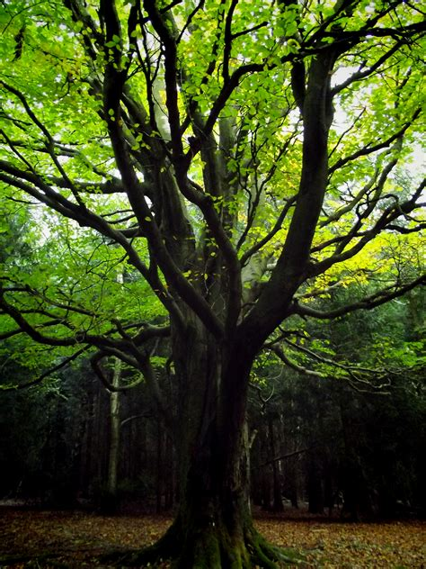 Green Forest Tree By Spicywolf153 On Deviantart