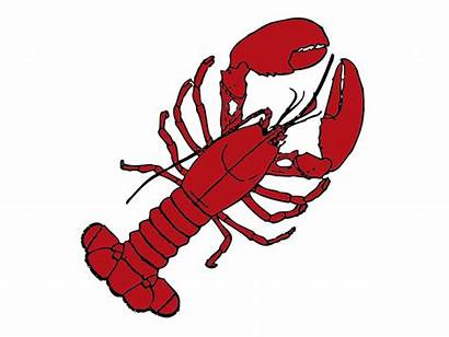 Lobster Clipart Maine Roll Clip Seafood Drawing