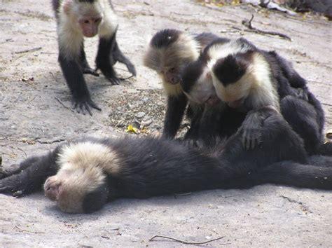 Zócalo On Kcrw Blog Archive What Monkeys Can Teach Us