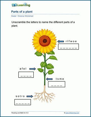 grade  plants worksheets  learning