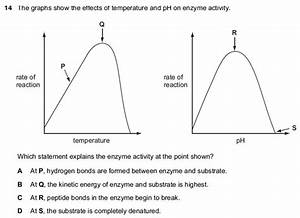 Graphs Of Rate Of Enzyme