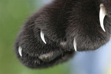 hepatitis   cat scrathes worms germs blog