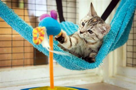 Crochet Cat Hammock by Beds Cat Hammock Pdf Pattern Corner Cat Hammock