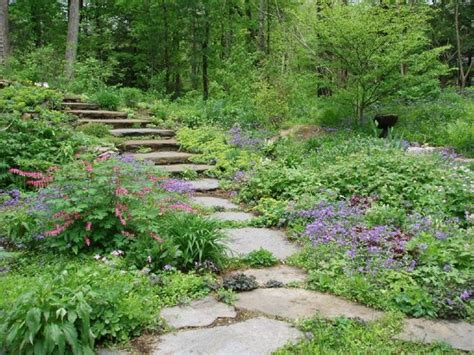 shady area plants 17 best images about woodland plants on pinterest gardens shade plants and the plant