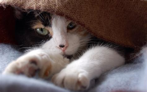 可爱宠物猫高清壁纸-壁纸下载-www.pp3.cn