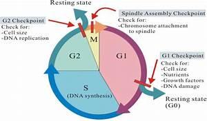Gleesonbiology    C9