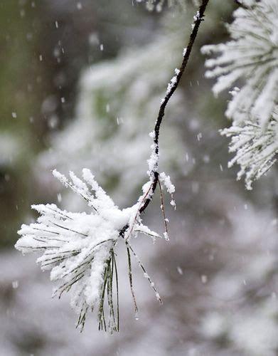 Flickr Snow Falling Christmas Tree