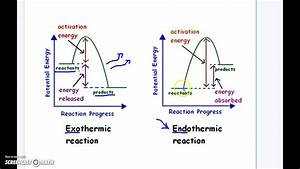 Endothermic Vs  Exothermic Reaction Graphs