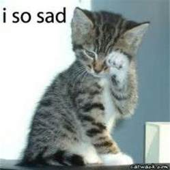 cat cry 17 best images about sad cats on sad kitty