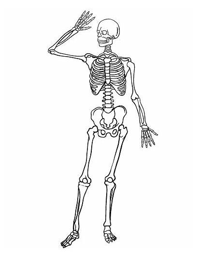 Skeleton Coloring Pages Pdf Printable Halloween Coloringcafe