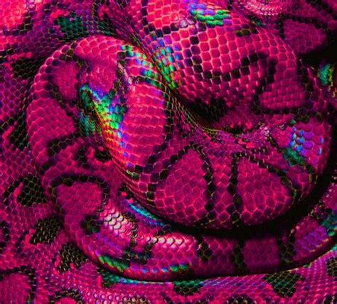 colorful snakes best 25 colorful snakes ideas on snakes