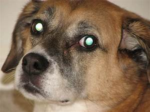 What Causes Green Eye in Animal Photographs?