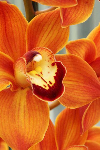 orange orchid  stock photo public domain pictures