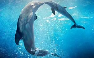 Schöne Delfin Bilder : 1001 ideen zum thema sch ne delfine bilder lifestyle ~ Frokenaadalensverden.com Haus und Dekorationen