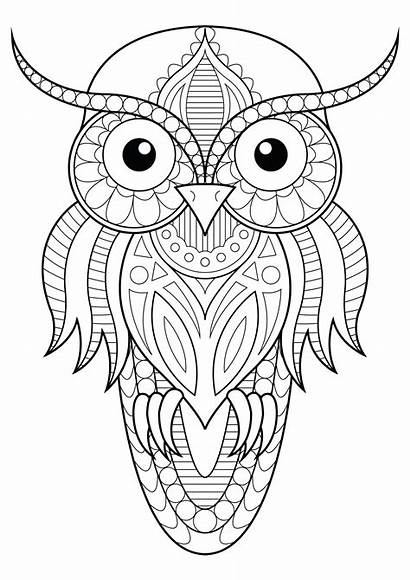 Owl Owls Simple Patterns Coloring Drawing Pages