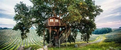 sull albero italia sette posti in italia in cui soggiornare in una casa sull