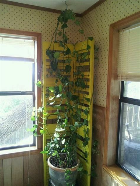 shutter door turned indoor ivy trellis home decor