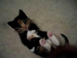 Cutest Kitten in the Whole Wide World