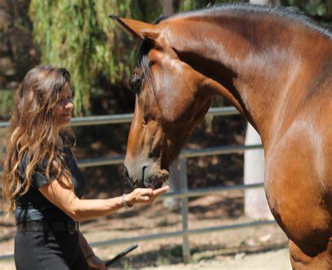 human horse sense horses version trainers liberty 2401 side
