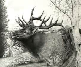 Bull Elk Drawings Pencil