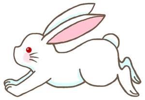 ウサギ:ウサギ(兎)1/かわいい動物の ...