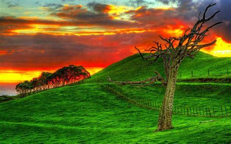 hd hillside sunset wallpaper