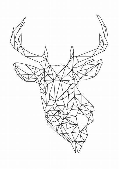 Geometric Animal Deer Drawing Designs Shapes Origami