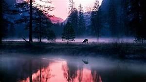 Animals, Mammals, Plants, Landscape, Deer, Mist, Wallpapers, Hd, Desktop, And, Mobile, Backgrounds