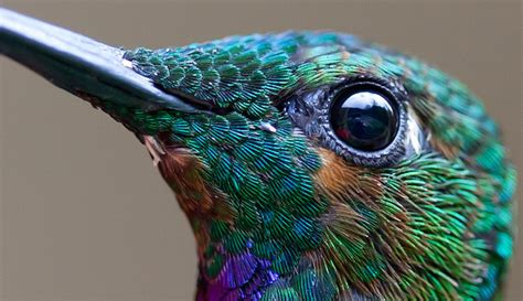 high res   hummingbirds   leave