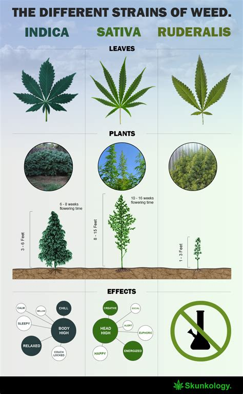 The Difference Between Male And Female Weed Plants