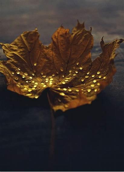Drop Gifs Fall Night Rain Autumn Water