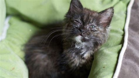 secret signs   sick cat healthy paws