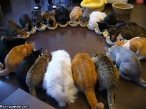 lots of cats lots of cats