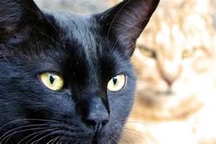 cat faces cat faces catnip part 3