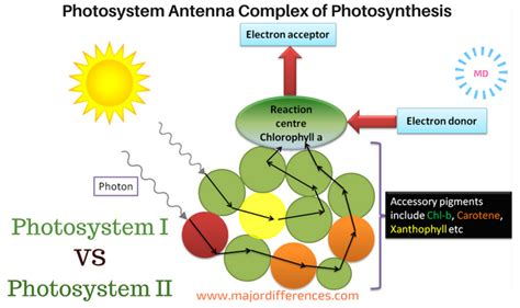 difference between l and light 10 differences between photosystem i and photosystem ii