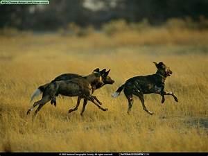 Fotos de hienas