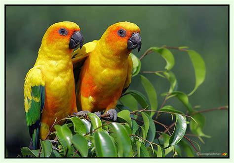 beautiful birds beautiful nature photo 23812779