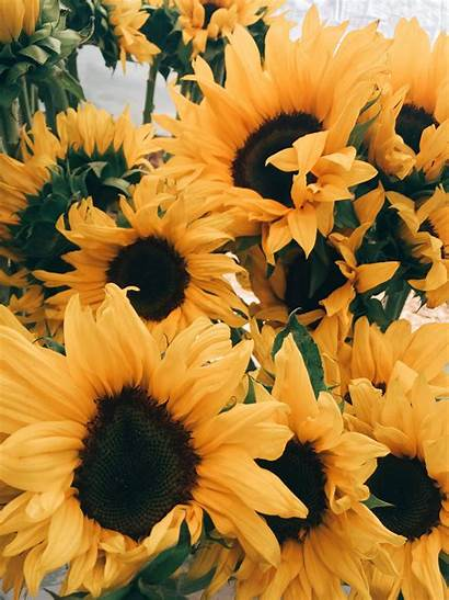 Aesthetic Sunflower Yellow Wallpapers Backgrounds Pastel Background