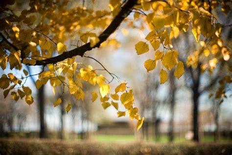 Dslr Hd Background by Images Green Desktop Images Nature