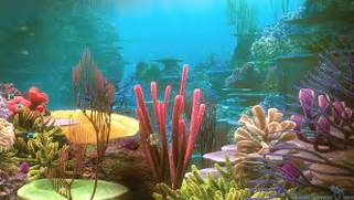 Nature Coral Reef Wallpaper HD 10 High Resolution Wallpaper Full Size  Coral Reef Wallpaper 1920x1080
