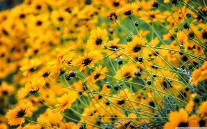 Yellow Desktop Backgrounds Very Wallpapers 4k Wide