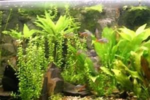 Aquarium Gestaltung Bilder : aquarium gestaltung aquariengestaltung f r s wasseraquarien ~ Lizthompson.info Haus und Dekorationen