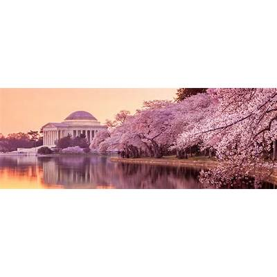Blooms & Pop Ups: The National Cherry Blossom Festival