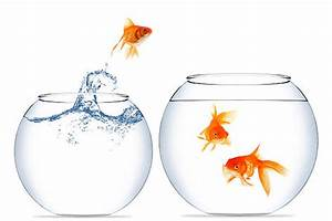 Goldfish Bowl Pictures, Images and Stock Photos - iStock