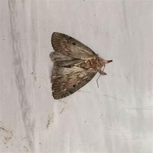 Motten In Küche : lebensmittel oder kleidermotte tiere ungeziefer motten ~ A.2002-acura-tl-radio.info Haus und Dekorationen