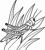 Coloring Realistic Printable Insect Kidsworksheetfun sketch template