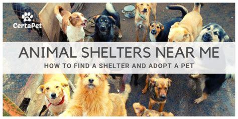 animal shelters   find  shelter  adopt  pet